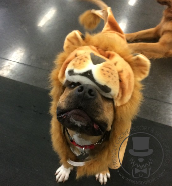 Watch out! This lion will give you kisses!