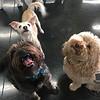Bosco, Sophie and Pippi!!