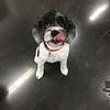 Hi sweet Obie :)