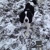Jake is such a sweet little pup!