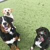 Rebb, Byron and Tilly playing out in the Enriched day care yard!