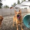 Ziva and Rusty