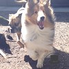 Chewy and Mojo running around the yard!