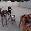 Raleigh, Rocco, Hunter and Gita