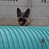 Peek-a-boo Lexie!