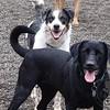 Jessie and Jetta