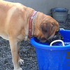 Silly Danner the water bucket is behind you...that's the play Pool!