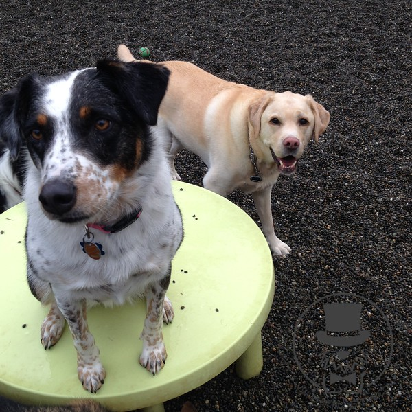 Jessie and Tucker having a blast with friends