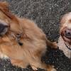 Fenway & Beatrice