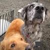 Rusty and Farley are enjoying their Sunday!