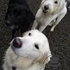 Brennan, Baily and Kula :)