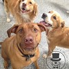 Follow us on Smug Mug for all our daily photos ! https://friendlygrove.smugmug.com/