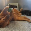 """This is Charlie's idea of """"Nap Time"""""""