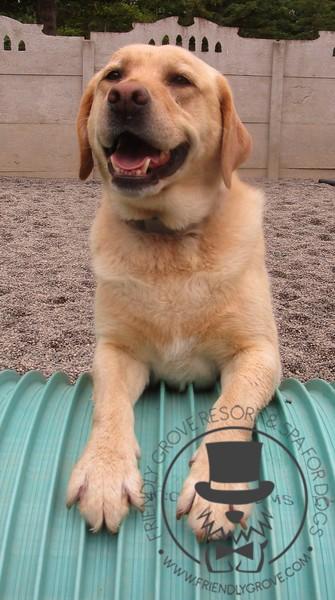Roxy is so happy!