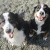 Benji and Bella, super cute siblings!
