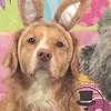 Madison bunny :)