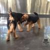 Terriers in action :)