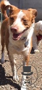 Lolo loves the sunshine