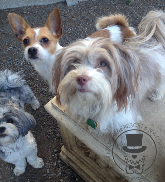 Yoshi, Lilly and Abby hanging out!