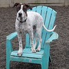 Zeus claiming the daycare chair ;)