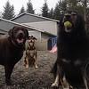 Izzy, Stella and Elsa posing !