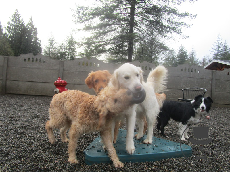 Goldie, Rusty, Kula and Jayne Austin =)