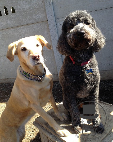 Tula and Kofi posing for their picture