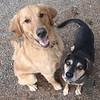 Fen and Daisy!
