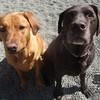 Cinnamon and Elsie