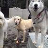 Brennan, Koda and Neko
