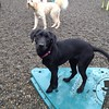 Rylee and Roshan, romping around in the rain! These Washington dogs don't mind one bit!