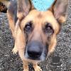 Sophie's sweet eyes :)