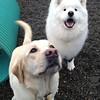 George and Juno - happy boys