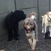 Ruger, Harry and Charlie, romping around the yard with friends