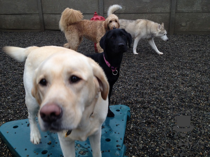 Happy dogs! We love our Sundays here at Friendly Grove