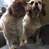 A little sibling kiss