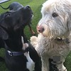 Kona and Teddy are good friends!