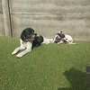 Obie and Tink sunbathing together. :)