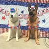 Perfect pups!