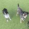 Roxie and Jasper!
