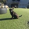 Little Lyla girl enjoying the sunshine. :)