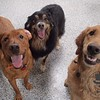 Rusty, Calvin and Oly smiling for the camera!