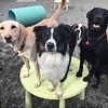 Kai, Gus, Stella, and Sophie :)