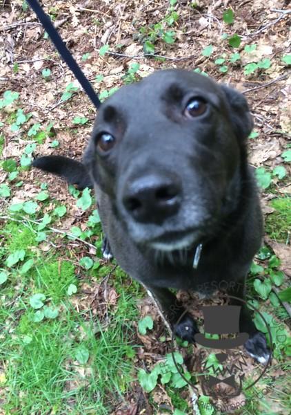 Bess loves trail walks!