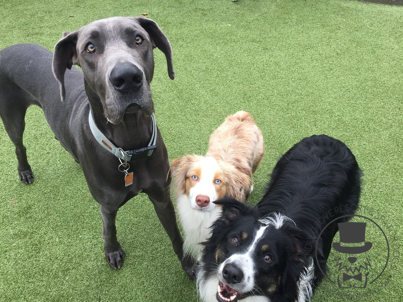 Benny, Asher and Gus!
