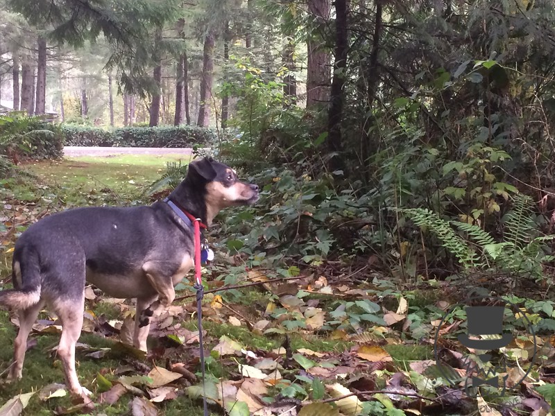 Jasper loves his trail walks and getting to be outside!