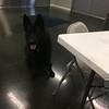 Ida patiently awaiting her treat.