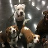 Just a few hotel hounds posing for a picture!