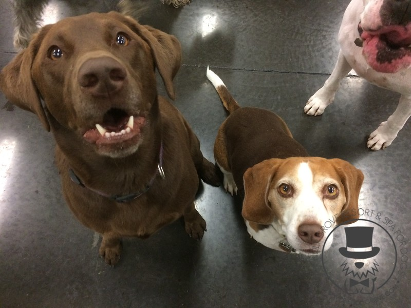 Just a couple of cute kids waiting on a treat.
