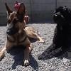 Yodi and Jake